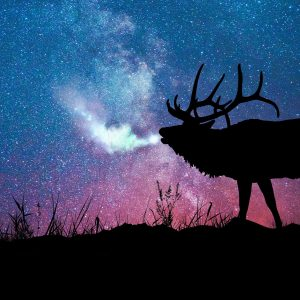 Meaning of an Elk sighting